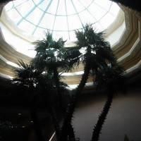 Стеклянная крыша — фото 58
