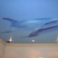 Натяжной потолок с дельфином от компании Строй Сервис