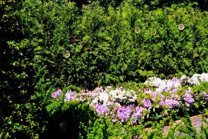 Императорские сады России VI — фото 59