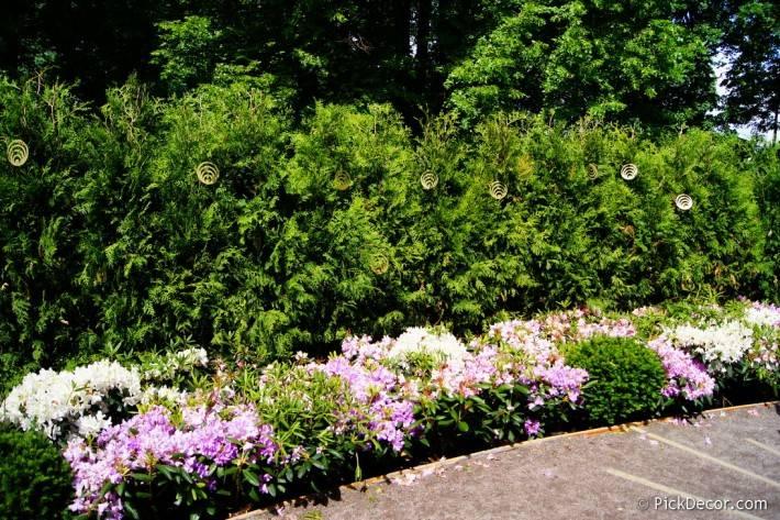 Императорские сады России VI — фото 34