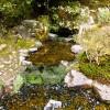 Сад храма Гинкаку-дзи — фото 4