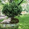 Императорские сады России IX — фото 121