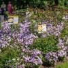 Императорские сады России IX — фото 112