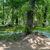 Императорские сады России IX — фото 93