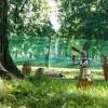 Императорские сады России IX — фото 90