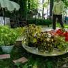 Императорские сады России IX — фото 87