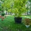 Императорские сады России IX — фото 73