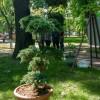 Императорские сады России IX — фото 79