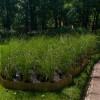 Императорские сады России IX — фото 99