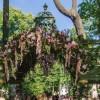 Императорские Сады 2018, Цветочная Ассамблея — фото 28