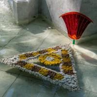 Императорские Сады 2018, Цветочная Ассамблея — фото 50