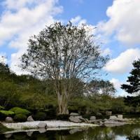 Японский сад в Парке Хермана — фото 1