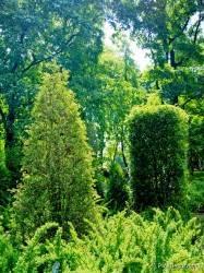 Императорские сады России VI — фото 86