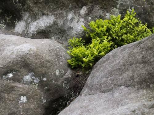Зеленое растение в камнях