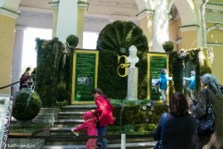 Императорские сады России VIII — фото 111
