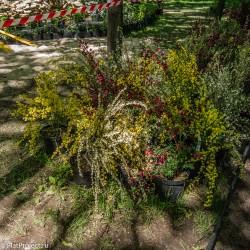 Императорские сады России VIII — фото 55